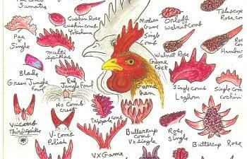 ChickenCombsRossSimpson.jpg