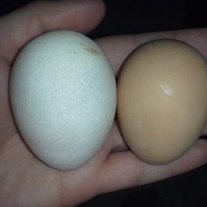 white egg.jpg
