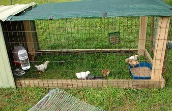 chicksday17011.jpg