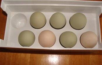 eggs004.jpg