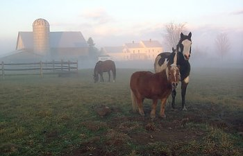 farmgirlsinthefog-1.jpg