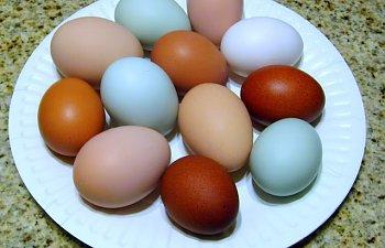 eggs002-3.jpg