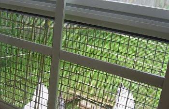 Coop-Window.jpg