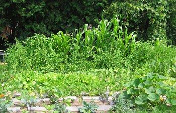 Garden-Overall.jpg
