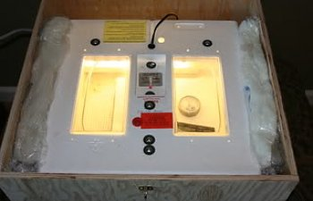 Incubatorbox002.jpg