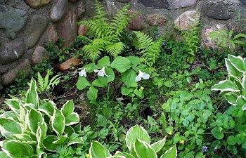 wildflowersLarge-1.jpg