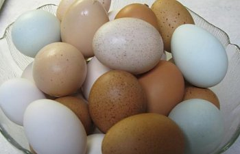 27158_bowl_of_eggs.jpg