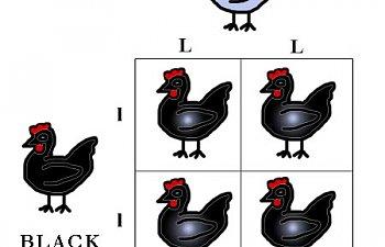 blacklav.jpg