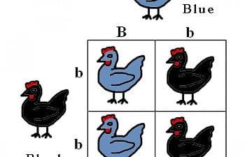 blackblue.jpg