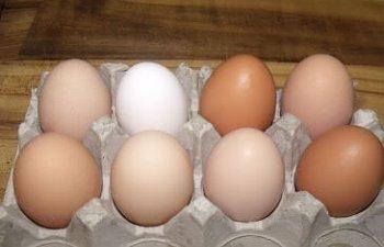 EggSamples11132011.jpg