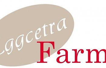 eggcetra_farms-1.jpg
