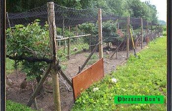 pheasantrun004.jpg
