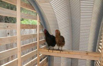 metal-buildings-steel-ag-building-chicken-coop-s-model.jpg
