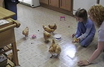 Jody_and_Amy_with_chicks.jpg