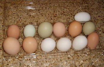 chickenseggs0062.jpg