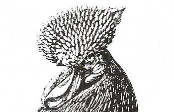 000001-2.jpg