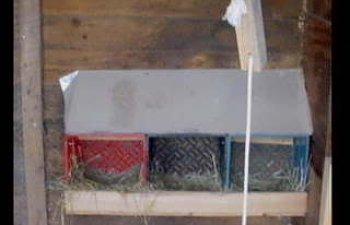 nestboxes.jpg
