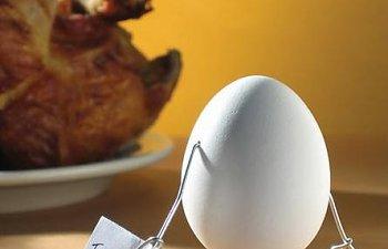 66619_chicken_egg.jpg