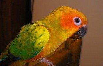 12306_birds_5.jpg