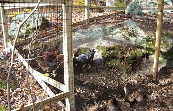 ChickenRun014.jpg