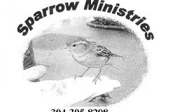 Sparrow_Min1.jpg