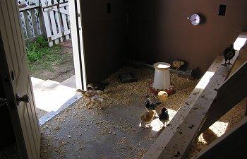 ChickenCoop017.jpg