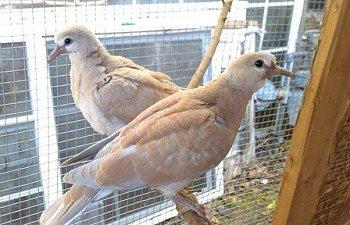 108640_doves-twins_4.jpg