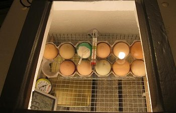 first-batch-eggs.jpg