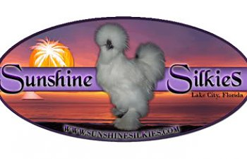 SunshineSilkies.jpg