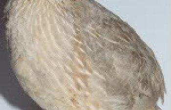 Silver-Platimum029-2.jpg
