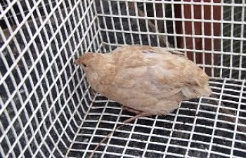 AviaryAgain041-1.jpg