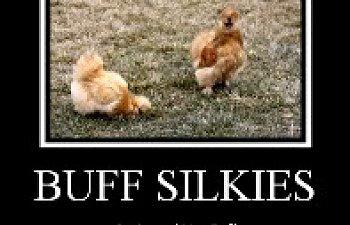 chick_mule035-1.jpg