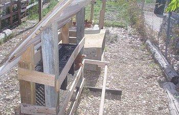 Chicks019Small.jpg