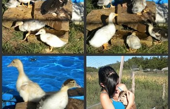 Duckcollage8-10.jpg