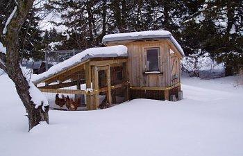 30865_chicken_coop_winter_005.jpg