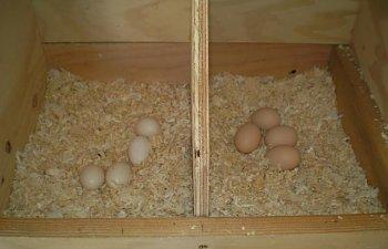 25445_new_eggs.jpg