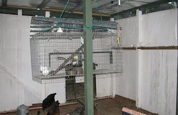 44847_back_of_aviary_and_hospital_cage.jpg