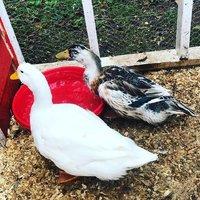 duck1.jpg