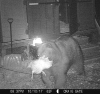 bear with ginger oct 10.jpg