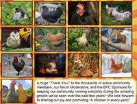 Forums | BackYard Chickens