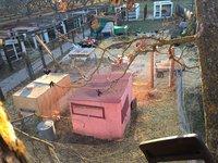 17-12-21_treesawing3.jpg