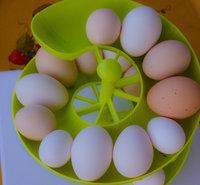 eggs July 23 (3 of 1).jpg