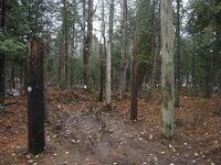 Pole Shed 3.JPG