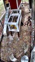 chick-ramp IMG_2700.jpg