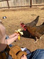 chicks7.jpg