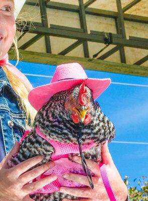 pageant chicken2.jpg