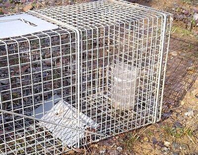 raccoon trap.jpg