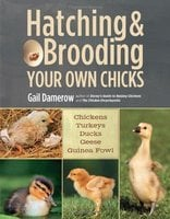 Hatching & Brooding Your Own Chicks by Gail, Damerow (2013)