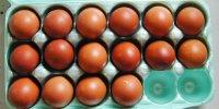 Marans eggs 4-19-17 2.JPG