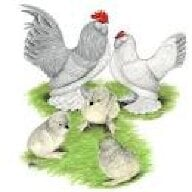 NewHopePoultry